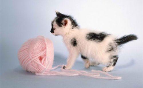 KittyYarn